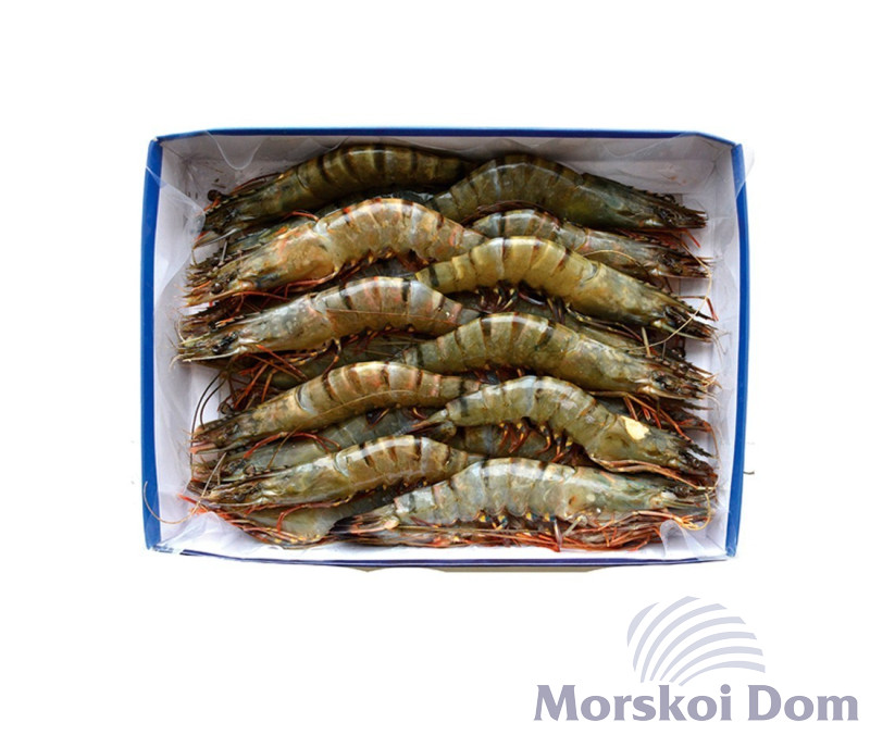 Tiger Prawns Head On 21/25 pcs/kg